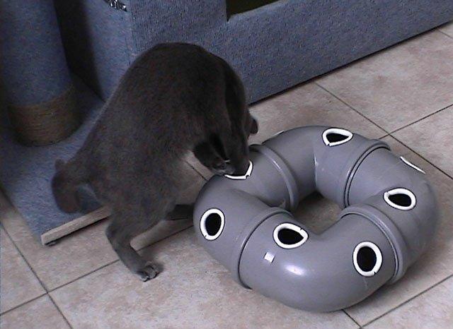 Как делать трубу для кошки своими руками