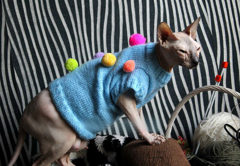 как связать одежду кошке