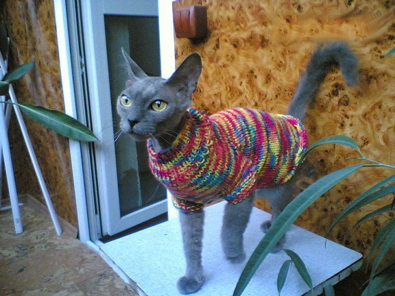 Вязать одежду кошкам