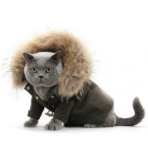 Свяжем одежду кошке