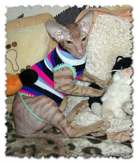 Как сшить платье своими руками для кошки