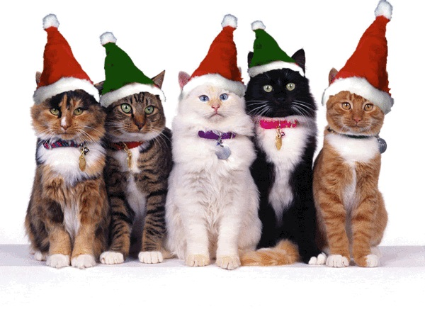 Костюм для кошки на Новый год своими руками