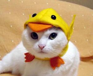 новогодний костюм для кошки своими руками
