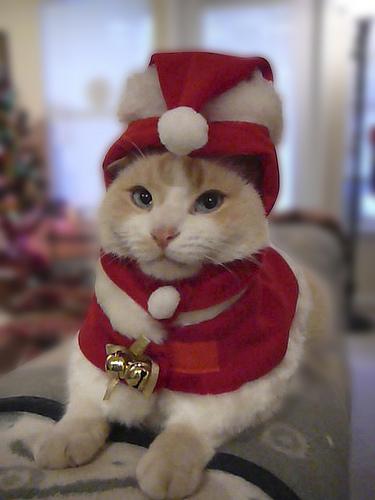 Костюм деда мороза для кота своими руками фото 404