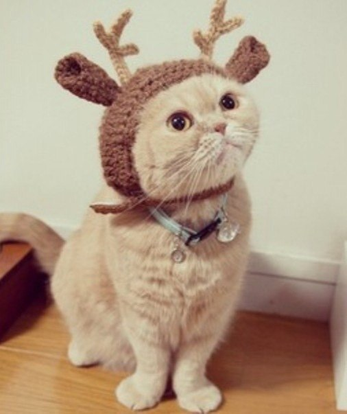 Как сшить новогодний костюм для кота своими