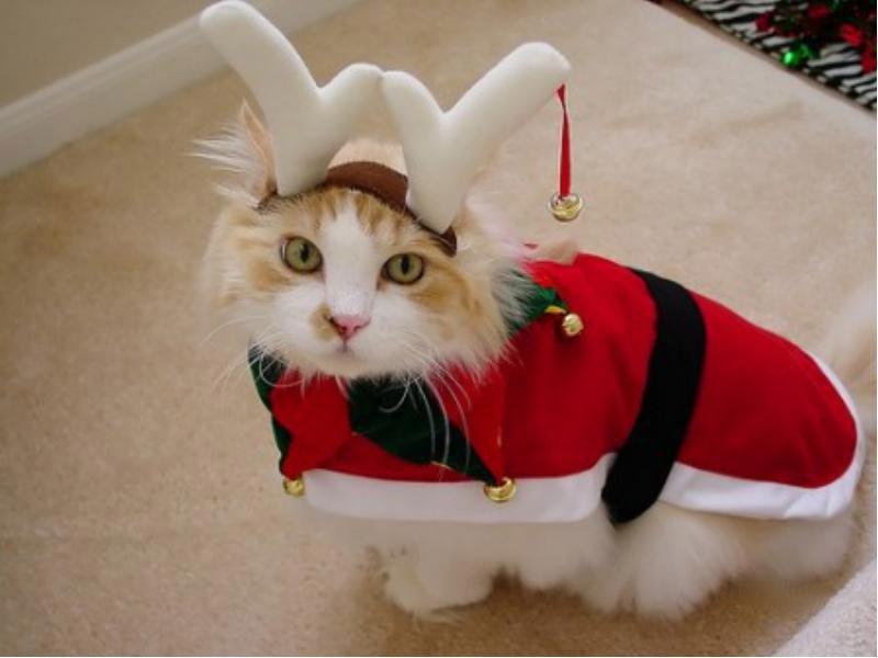 Как сделать костюм для кота на новый год