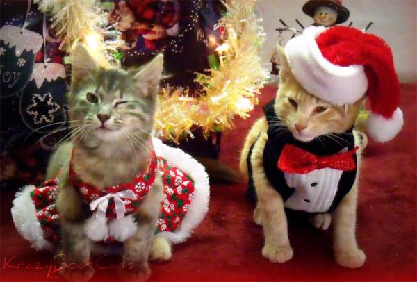 костюм для кота на новый год