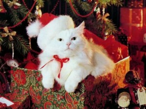 костюм Санты для кота