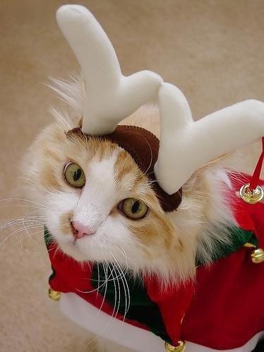 Костюм деда мороза для кота своими руками фото 332