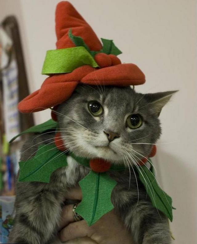 Карнавальный костюм для кошки