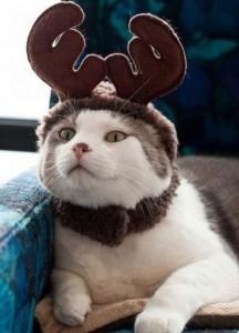 костюм оленёнка для кота
