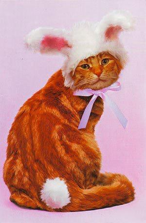 Как сшить костюм для кошки на новый год