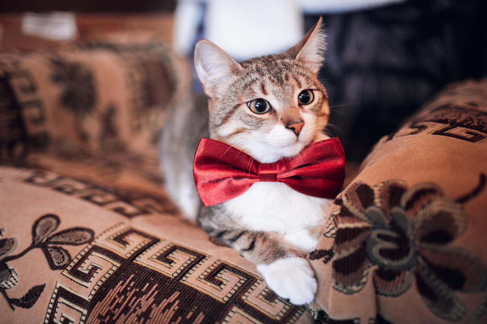 Воротничок своими руками для кота