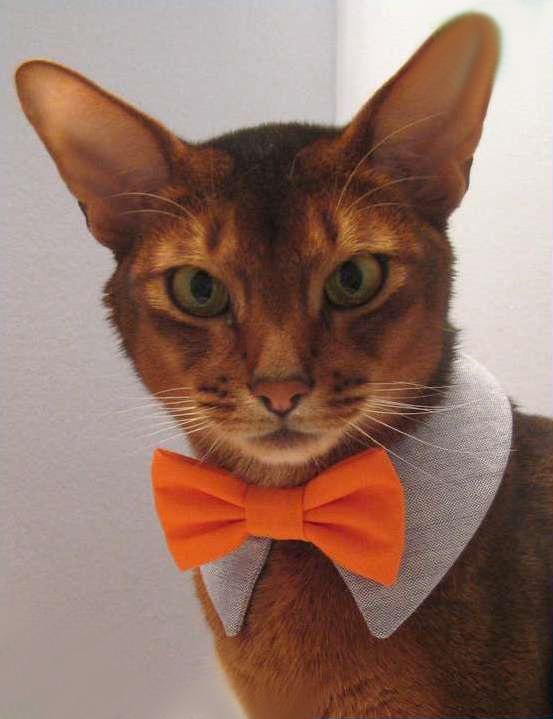 Как сделать воротник для кошки фото 951