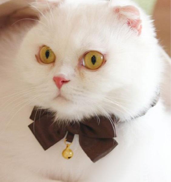 Шьём галстук-бабочку для питомца
