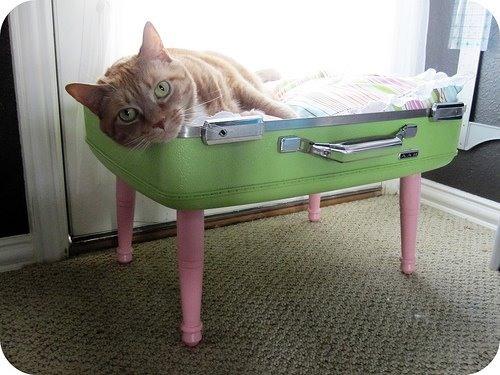 Дом для кошки из старого чемодана