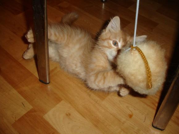Игрушки для котят как сделать