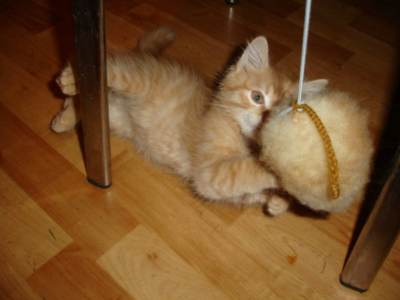 Игрушки для котёнка своими руками фото