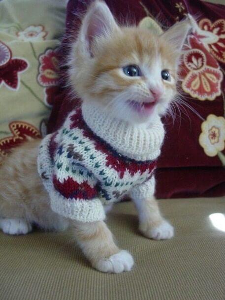 Вяжем жилет для кота