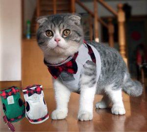 Идеи шлеек для котов