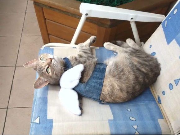 Шлейка-жилет для кошки Крылья Ангела
