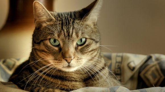 Рекомендации для содержания и поддержания здоровья кошки